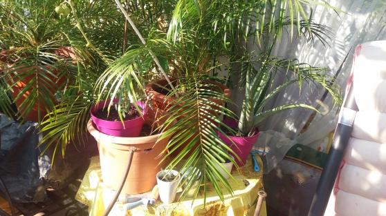 vente de plantes et fleurs en pot