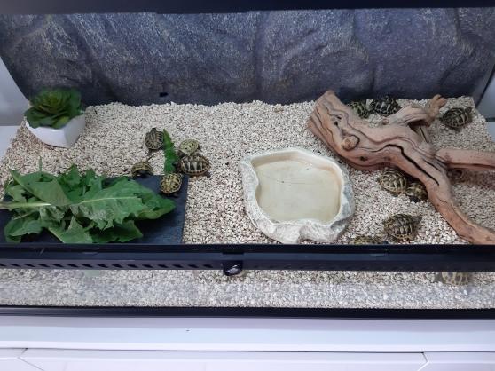 Annonce occasion, vente ou achat 'vivarium pour tortue de terre'