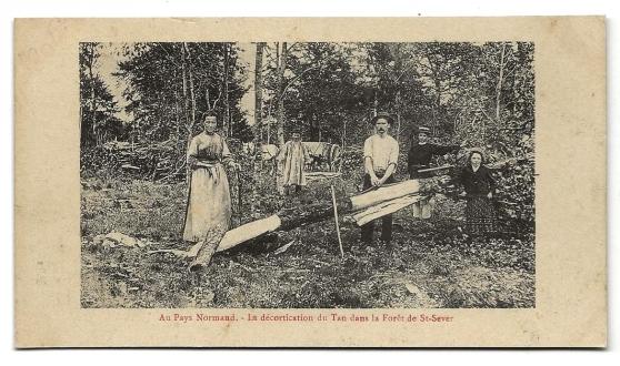 Annonce occasion, vente ou achat 'Forêt de St-Sever - La Décortication....'