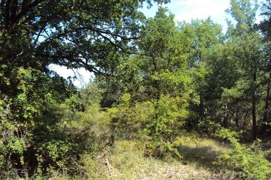 Terrain agricole Cucuron chênes