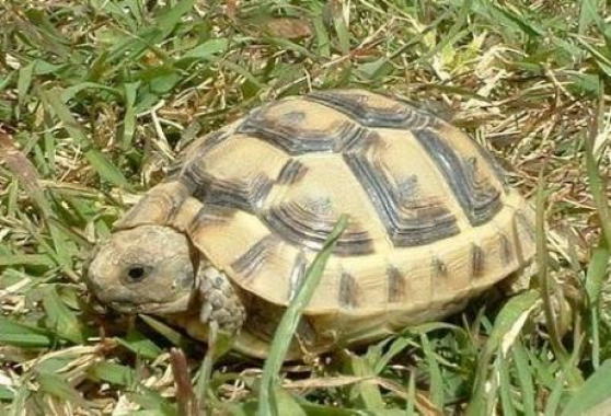 Annonce occasion, vente ou achat 'trés belles tortues'