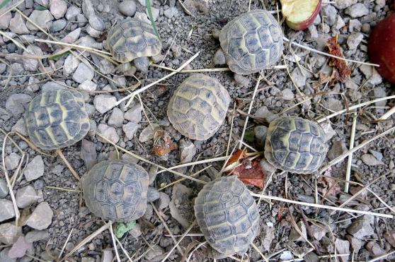 tortue de terre - Annonce gratuite marche.fr