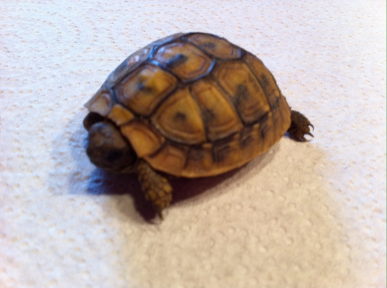 Vends tortues her mann boet geri animaux tortues al s for Ales code postal