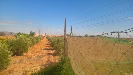 Annonce occasion, vente ou achat 'Très belle ferme titrée à 17 km de Marra'