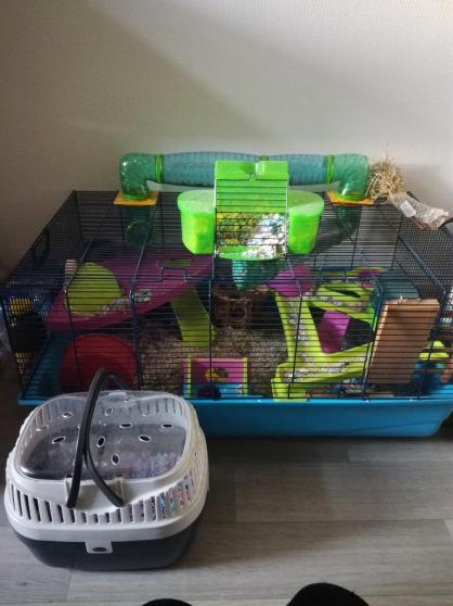 Annonce occasion, vente ou achat 'Grande cage hamster'