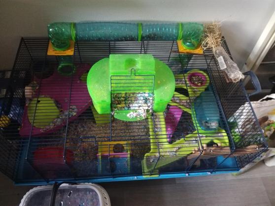 Grande cage hamster - Photo 2