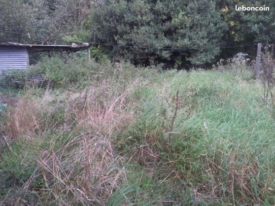 Débroussaillage difficile terrain friche - Photo 3