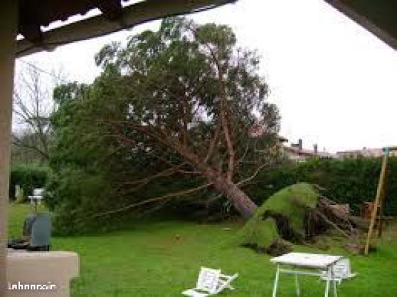 Abattage débitage évacuations d\'arbres - Photo 2
