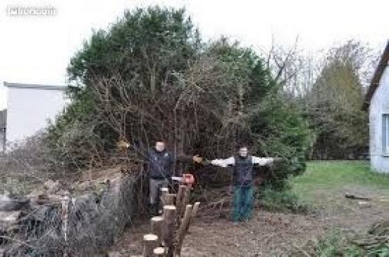 Abattage débitage évacuations d\'arbres - Photo 3