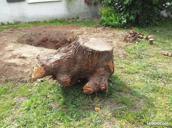 Abattage débitage évacuations d\'arbres - Photo 4