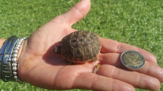 bébe tortue hh née cet éte - Photo 2
