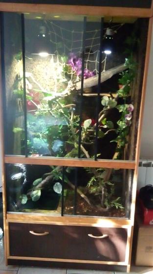 terrarium arboricole animaux aquarium vivarium 224 valenciennes reference ani aqu ter
