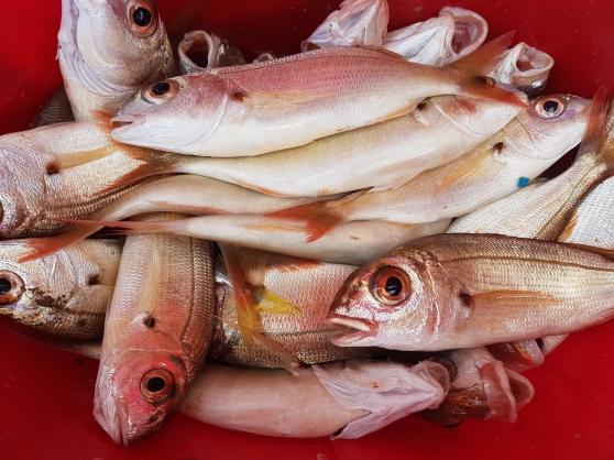 troc poisson frais du jour