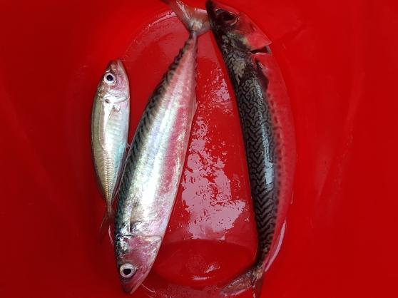 troc poisson frais du jour - Photo 2