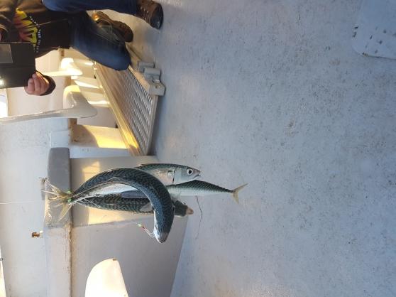 troc poisson frais du jour - Photo 3