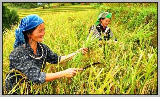 Annonce occasion, vente ou achat 'Rencontres avec des minorités vietnamien'