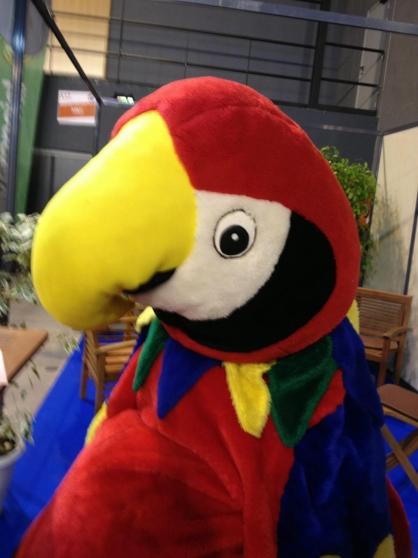 Costume perroquet