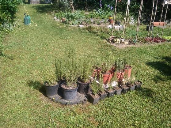 Plantes aromatiques et autres