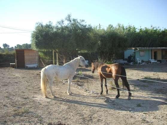pension chevaux à martigues - Annonce gratuite marche.fr