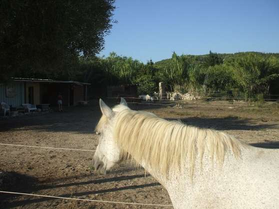 pension chevaux - Photo 2