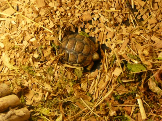 Annonce occasion, vente ou achat 'BB tortues'