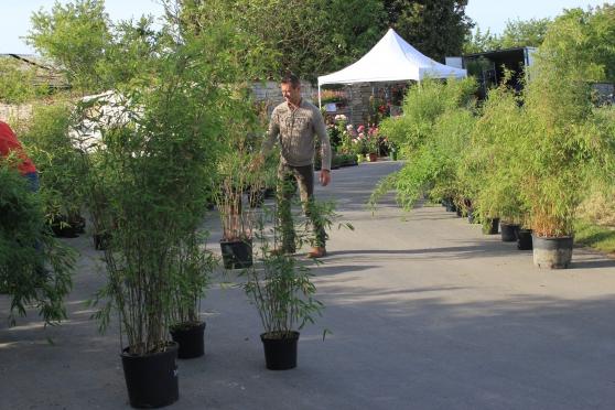 marché aux plantes produits fermiers - Photo 3