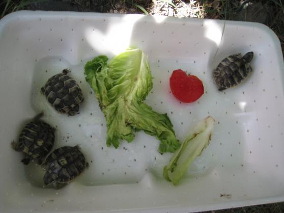 bébés tortues de terre 2019