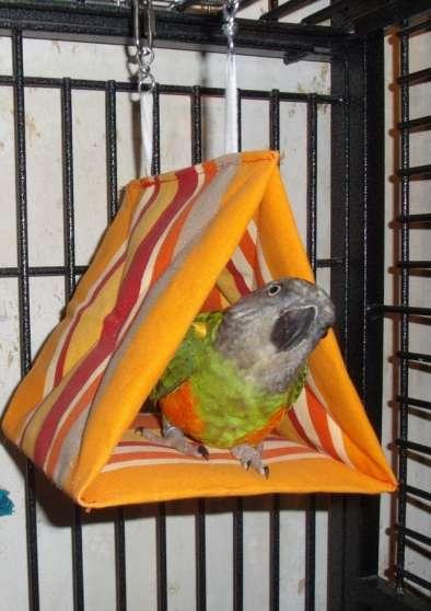 """Tente"""" Dodo"""" pour vos oiseaux"""