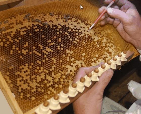 Annonce occasion, vente ou achat 'apiculteurs'