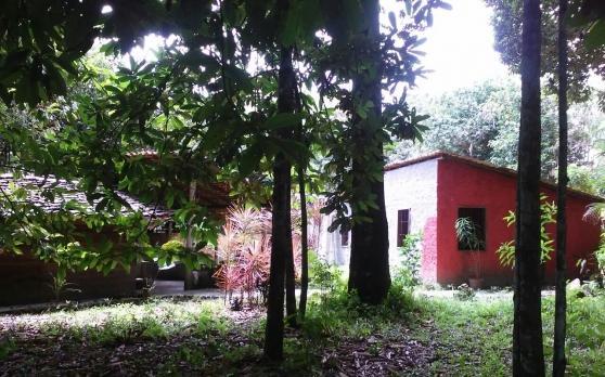 Vend terrain de 11 hectares BRESIL