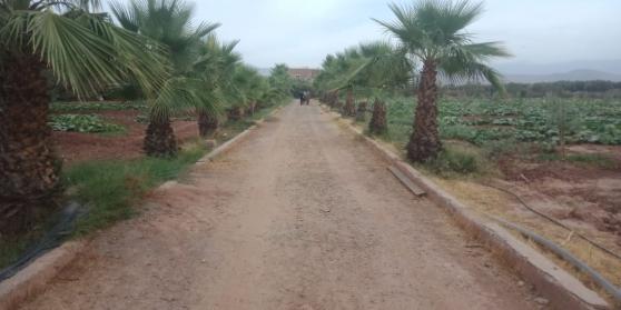 Annonce occasion, vente ou achat 'Ferme tirée 4.25 ha à 17 km de Marrakech'