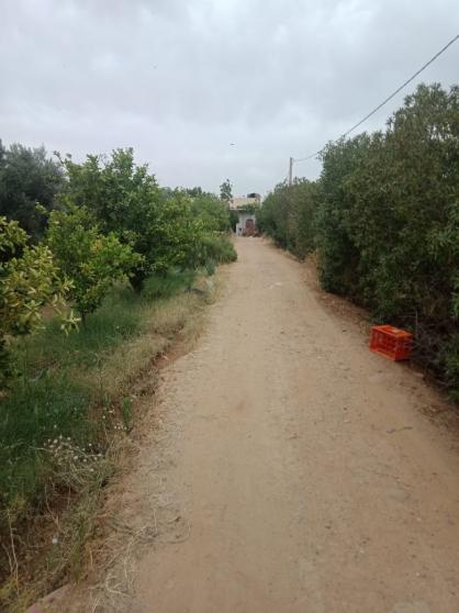 Ferme titrée 20 km de Marrakech 3.5 ha