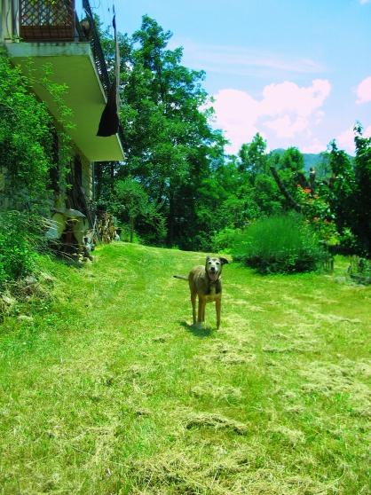 Garde animaux de compagnie en famille - Photo 3