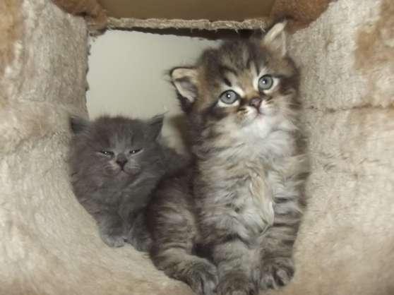 rencontre adulte laval rencontre chat adulte et chaton