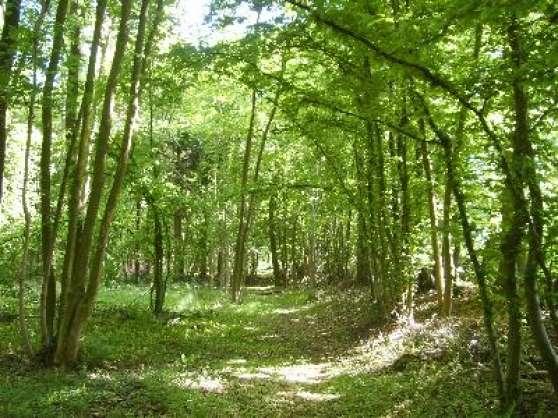 parcelle bois foret 224 ligny en barrois immobilier a vendre terrains 224 ligny en barrois