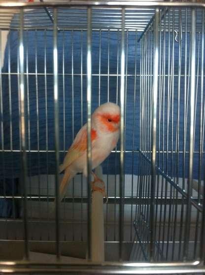accueil vos oiseaux contre bons soins