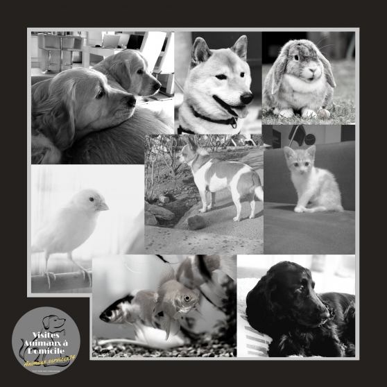 Gardes et Visites animaux à domicile