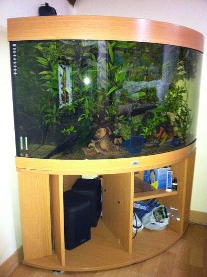 aquarium juwel 350 l angle aquarium d angle trigon 190l jewel animaux aquarium. Black Bedroom Furniture Sets. Home Design Ideas