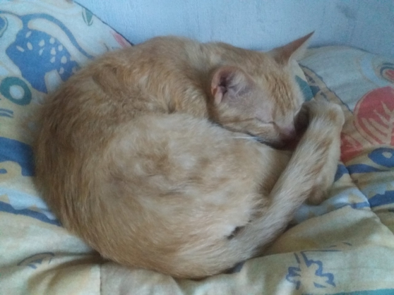 Donne chaton mâlecastré