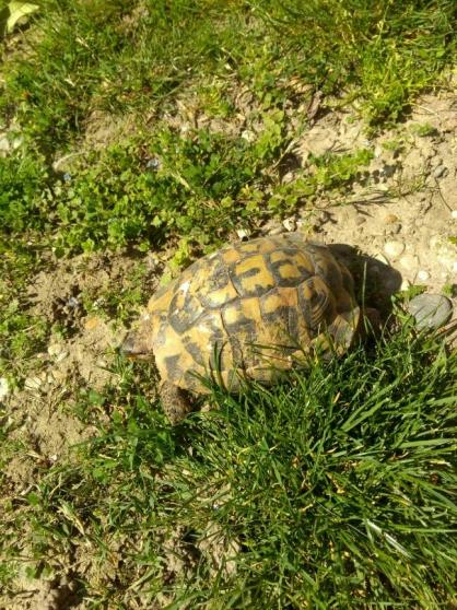 tortues mâle 12 ans