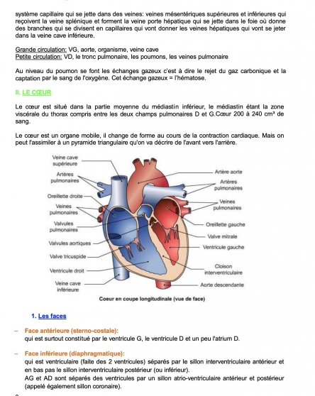 PACES UE5 anatomie cours Strasbourg