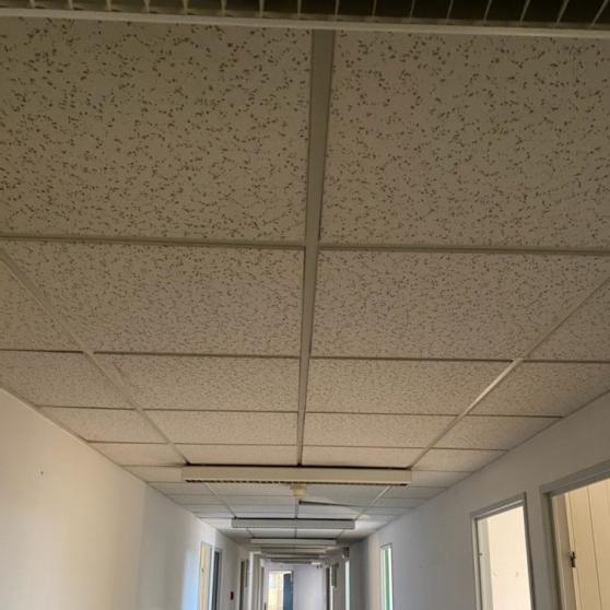 Annonce occasion, vente ou achat 'Faux plafond à démonter'