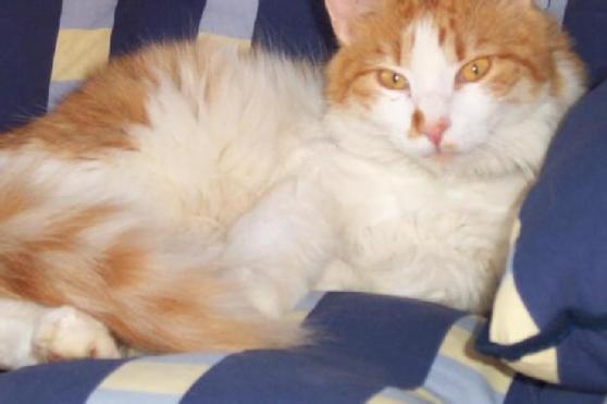 Don de mon chat Dorra