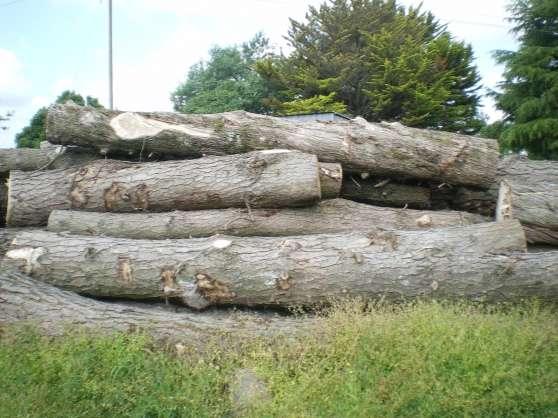 Vends lot tronc sapin bois chauffage JARDIN  NATURE BOIS à Marzan REFERENCE