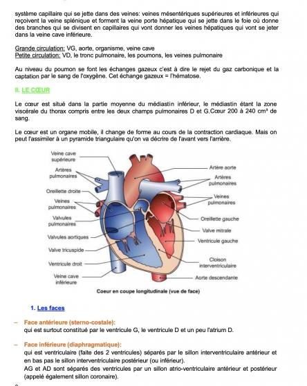 Anatomie UE5 paces Strasbourg