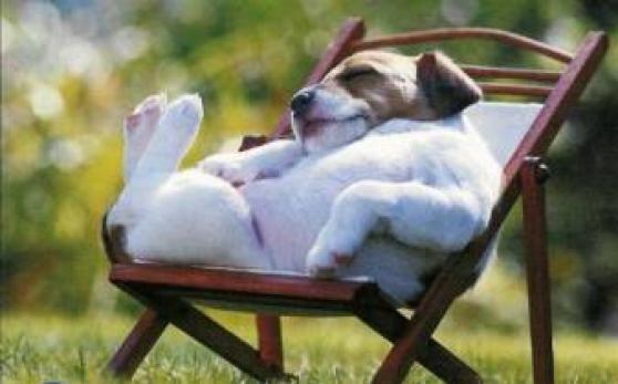 Petite Annonce : Garde animaux en famille - Préparez votre absence ou vacances pour vos animaux en toute sécurité