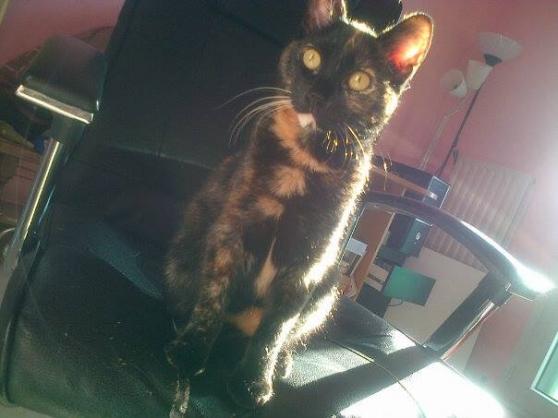 chaton femelle 4 mois cherche nouvelle f