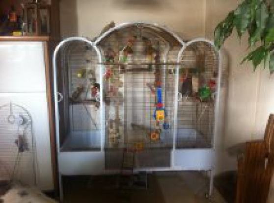 Annonce occasion, vente ou achat 'cage xxl perroquet'