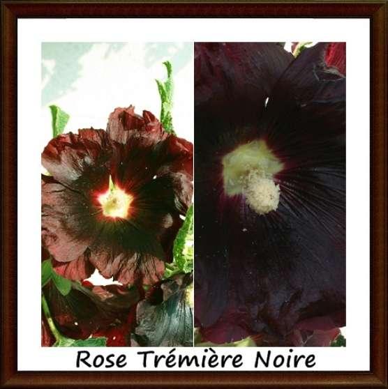 Recherchez vente ou occasion jardin nature annonce for Vente de fleurs par correspondance