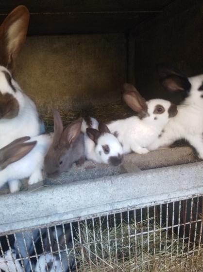 Jeunes lapins - Photo 3